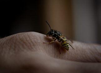 Wespen op een hand